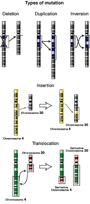 Types of genetic mutations