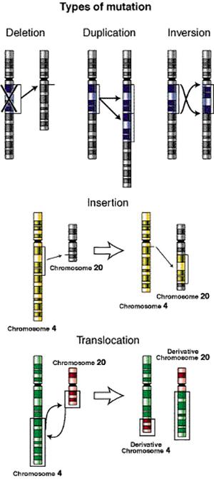 Types of genetic mutations