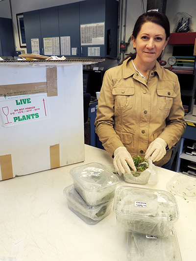 Author Angela Records inspecting a shipment of live plants at the USDA-APHIS  facilities at the Port of Los Angeles, as a guest, looking for  invasive species.