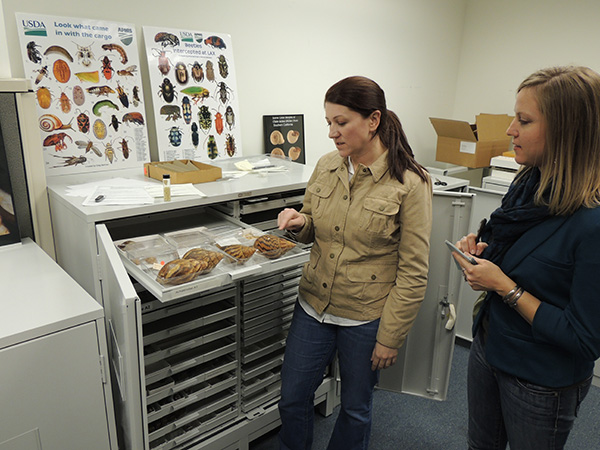 Authors Angela and Roberta viewing specimens at the USDA-APHIS facilities in Los Angeles.